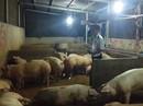 Bộ Công an đột kích 1 cơ sở trung chuyển heo ở Đồng Nai