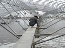 Bạc Liêu khát vọng ngành công nghiệp tôm