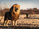 Khai quật được sư tử khổng lồ cao bằng người trưởng thành