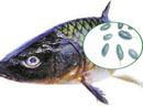 Bộ phận này của cá ăn vào sẽ dính độc