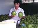 Bưởi da xanh, dừa xiêm xanh Bến Tre được cấp giấy đăng ký chỉ dẫn địa lý