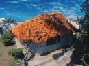 """Dân tình """"phát sốt"""" với ngôi nhà phủ kín hoa ở Lâm Đồng"""