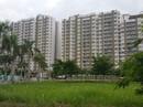 Mỗi năm, TP HCM cần phát triển khoảng 80.000 căn nhà cho người dân