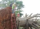 """Nộp phạt 750.000 đồng, chủ hàng được nhận lại cây """"quái thú"""" cuối cùng"""