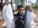 """""""Nín thở"""" chờ phán quyết, xuất khẩu cá tra sang Mỹ giảm mạnh"""