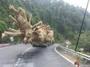 """Cục C67: Chưa đủ cơ sở quy kết CSGT """"bảo kê"""" xe chở cây """"quái thú"""" lọt qua 19 tỉnh"""
