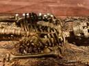 BÁU VẬT KHẢO CỔ VIỆT NAM (*): Bí mật ngàn năm trong mộ thuyền