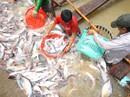 Xuất khẩu cá tra sang Trung Quốc sẽ khắt khe hơn