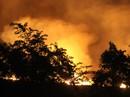 Khu rừng tràm ở Bình Chánh cháy ngùn ngụt trong đêm