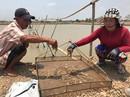 Chủ doanh nghiệp thủy sản đầu độc ao tôm