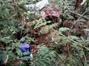 Phát hiện 1 thi thể đang phân hủy giữa rừng
