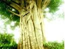 """Vụ cây """"quái thú"""": Phó chủ tịch xã ký bừa"""