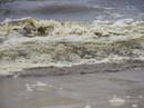 Phát hiện tảo giáp trong khu vực biển đổi màu bất thường ở Đà Nẵng