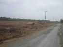 Long An: Cưỡng chế gần 200 căn chòi cất trái phép để chiếm đất công