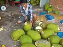 """Ồ ạt trồng mít Thái siêu sớm: Cẩn trọng """"bài học cam sành"""""""