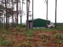 Thuê đất rừng rồi phá rừng, bán đất