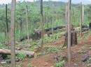 """""""Ăn"""" đất rừng, nhiều lãnh đạo bị kỷ luật"""
