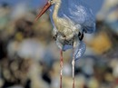 Hình ảnh kinh ngạc về muôn loài chết chìm trong rác thải