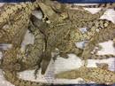 Bị đóng thùng trên máy bay, 50 con cá sấu cắn xé lẫn nhau