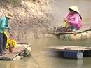 (eMagazine) - Độc đáo qua sông đậm chất miền Tây Nam bộ
