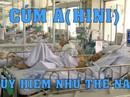 Cúm A(H1N1) nguy hiểm thế nào?