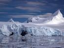 Khi Nam Cực xông tới sân nhà