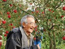 Vườn táo đẹp như cổ tích của cụ ông người Nhật