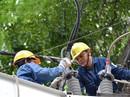 Giữ an toàn điện mùa mưa