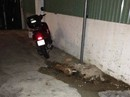 Khách Nga bức xúc vì hành động ném con chó từ tầng 24 xuống đất