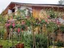Mê mẩn khu vườn hoa hồng đẹp như mơ ở Đà Lạt