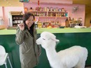 Khách vừa uống cà phê vừa cho lạc đà ăn ở Đài Loan