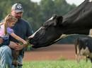 """Sữa organic """"thực thụ"""" gặp khó ở Mỹ"""