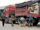 """""""Lật mặt"""" nông sản Trung Quốc nhái hàng Đà Lạt"""