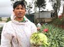 ĐIỀU TRA: Nông sản Trung Quốc nhái - nỗi đau của nông dân Đà Lạt