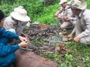 Quảng Trị phát hiện gần 500 đầu đạn pháo