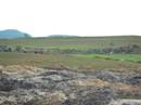 Đổ xô về Phú Yên tìm đá đen