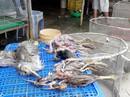 Nhiều bức xúc về video tàn sát chim trời ở chợ chim miền Tây