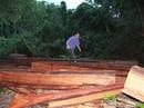 Loay hoay xử lý, rừng vẫn bị triệt hạ