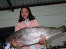 Bắt được cá lạ nghi sủ vàng quý hiếm dài gần 1 m