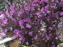 'Hoa ngủ đông': Như củi khô nhưng nở rất đẹp