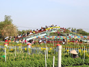 Chưa Tết, làng hoa lớn nhất miền Tây đã nườm nượp khách