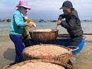 Cận Tết, ngư dân Quảng Ngãi trúng đậm mùa ruốc