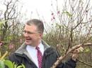 Đại sứ Mỹ Daniel Kritenbrink ra vườn ghép đào Tết