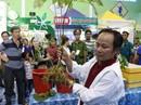 Hơn 100 triệu/kg, sâm Ngọc Linh vẫn bán đắt như tôm tươi