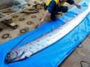Điềm báo về thảm hoạ chết chóc trôi dạt trên bờ biển Nhật Bản