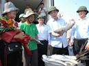 Đầu năm ra biển, ngư dân Quảng Trị trúng đàn cá bè gần 140 tấn