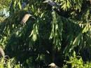 Ly kỳ vụ án khu vườn có ma ở Vĩnh Long