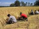 Nguy cơ cạn kiệt lương thực toàn cầu
