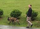 Mật vụ Mỹ dẫn chó nghiệp vụ lùng sục quanh khách sạn JW Marriott