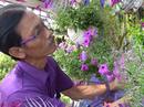 """[Emagazine] """"Phù thủy"""" của các loài hoa màu tím"""